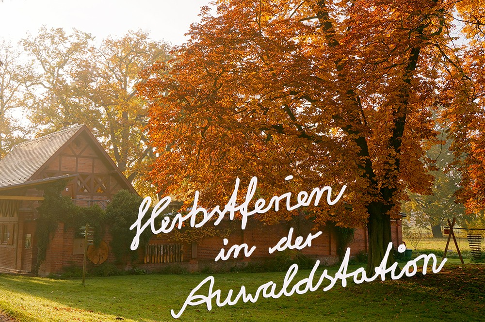 Herbstferien_Bild