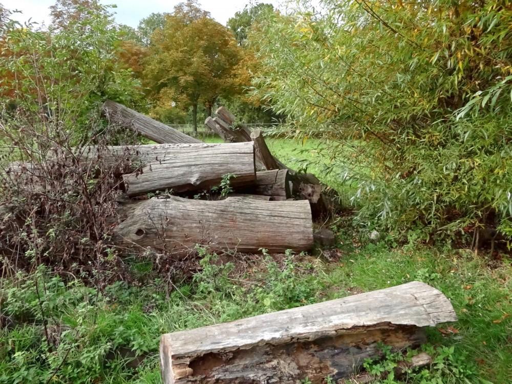 Totholzhaufen bei der Auwaldstation