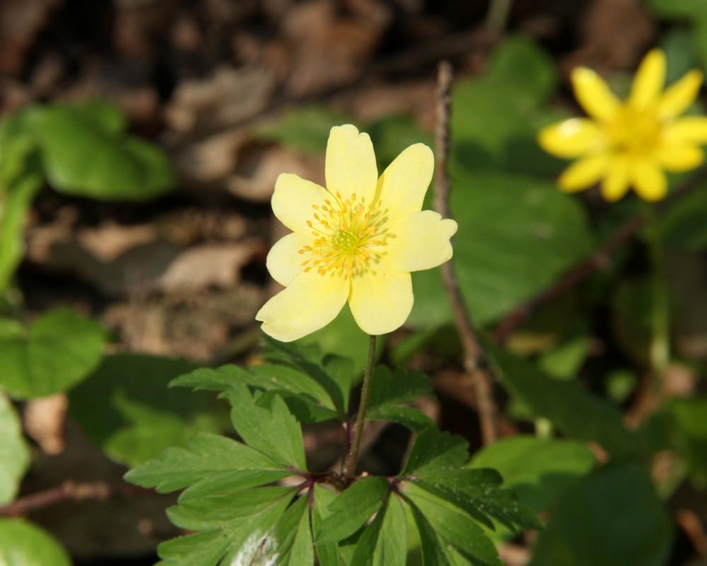 """Geräumig Welche Blumen Blühen Im März Referenz Von """"januar, Februar, März, April — Die Jahresuhr"""