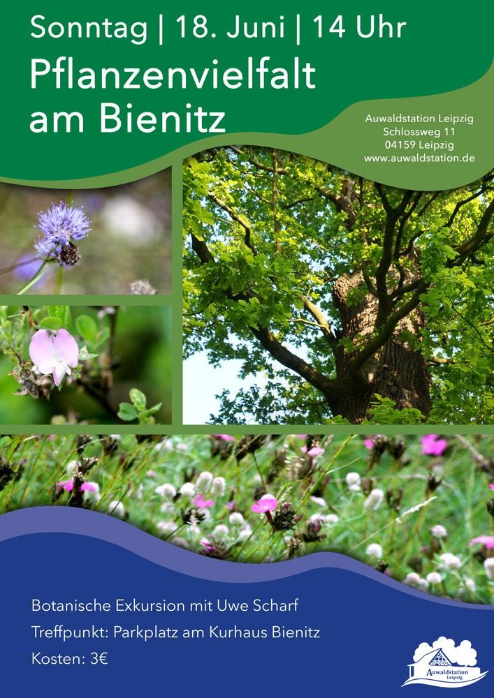 06-Pflanzenvielfalt-Bienitz