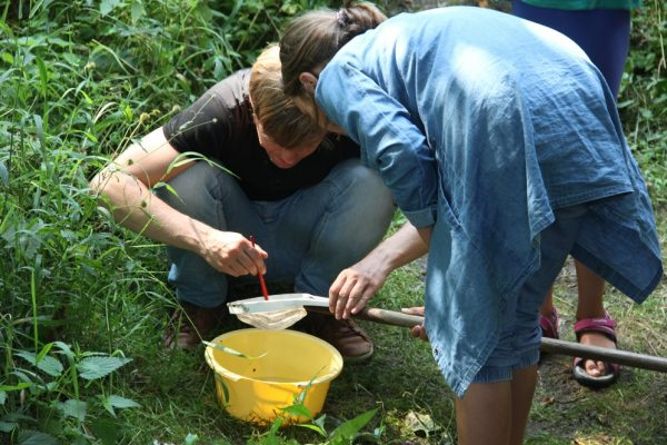 und entdeckten mit Hilfe von Keschern zahlreiche Bewohner wie Bachflohkrebse oder Wasserskorpione.