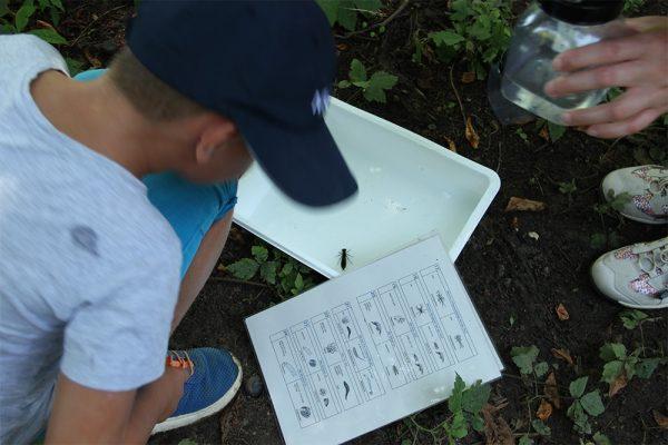Die Ferienkinder untersuchten außerdem den Lebensraum Wasser ...