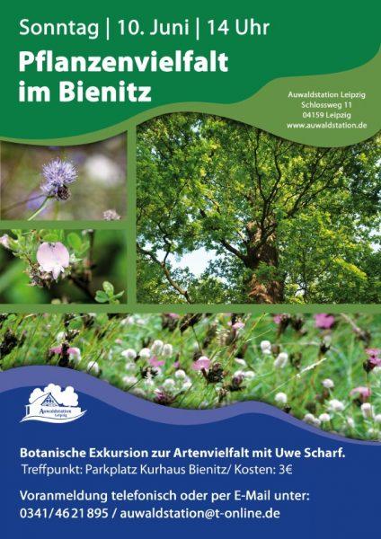 Pflanzenvielfalt am Bienitz entdecken, am 10. Juni